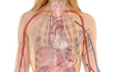 Symbolique des organes : des mots sur les maux.